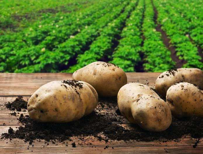 Potatoes: tools for a better start to the season