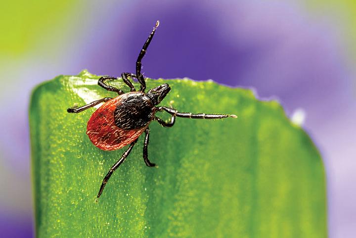La maladie de Lyme : comment la prévenir